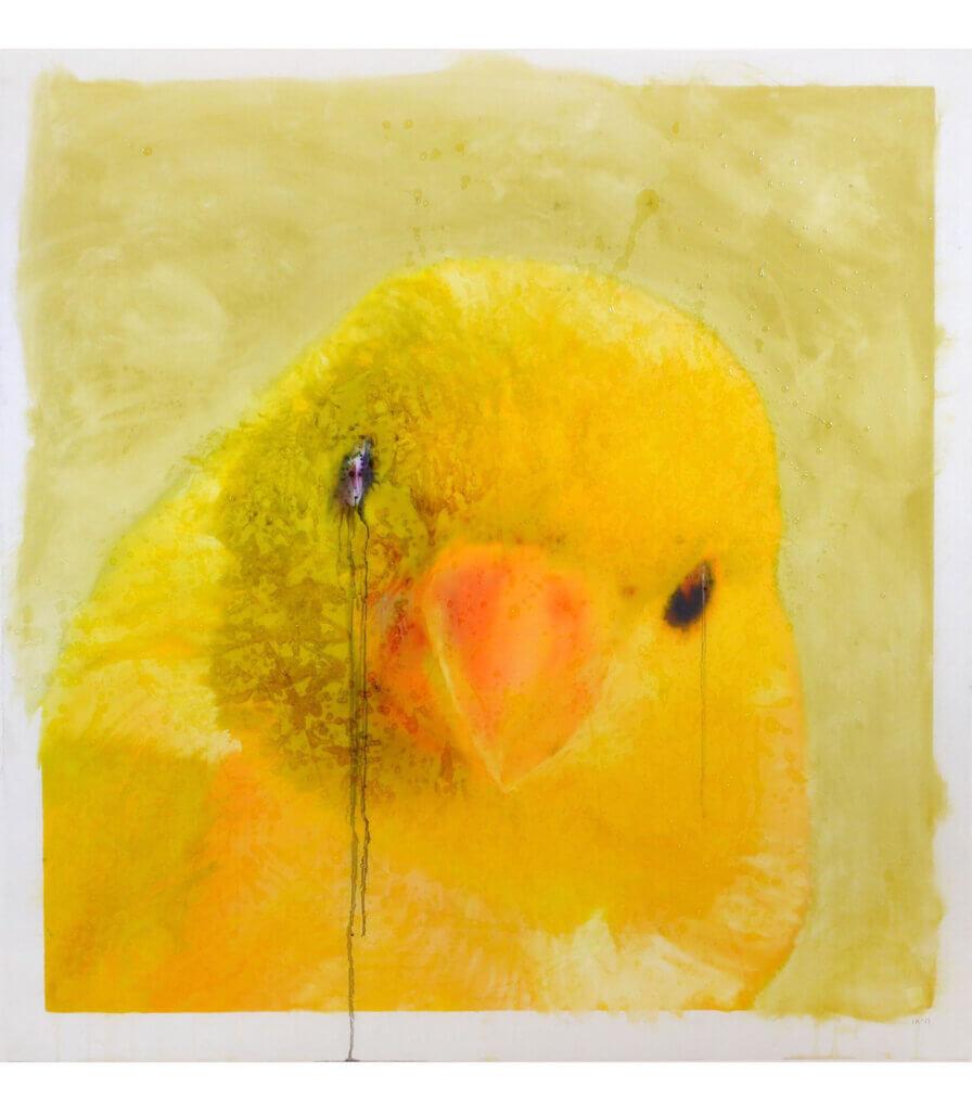 Portraits (Canary)