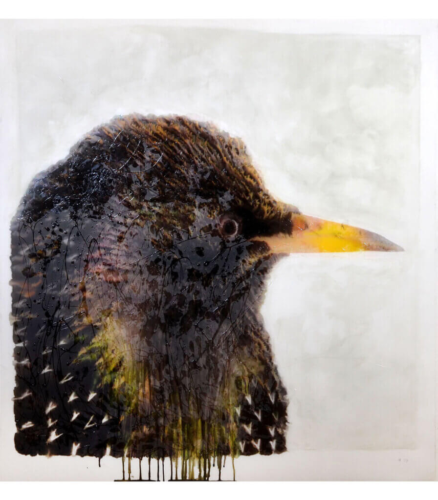 Portraits (Starling)