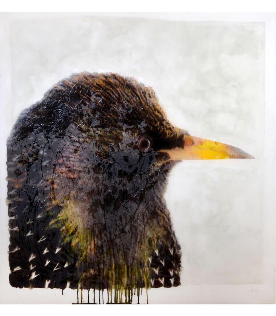 Portraits (Starling)