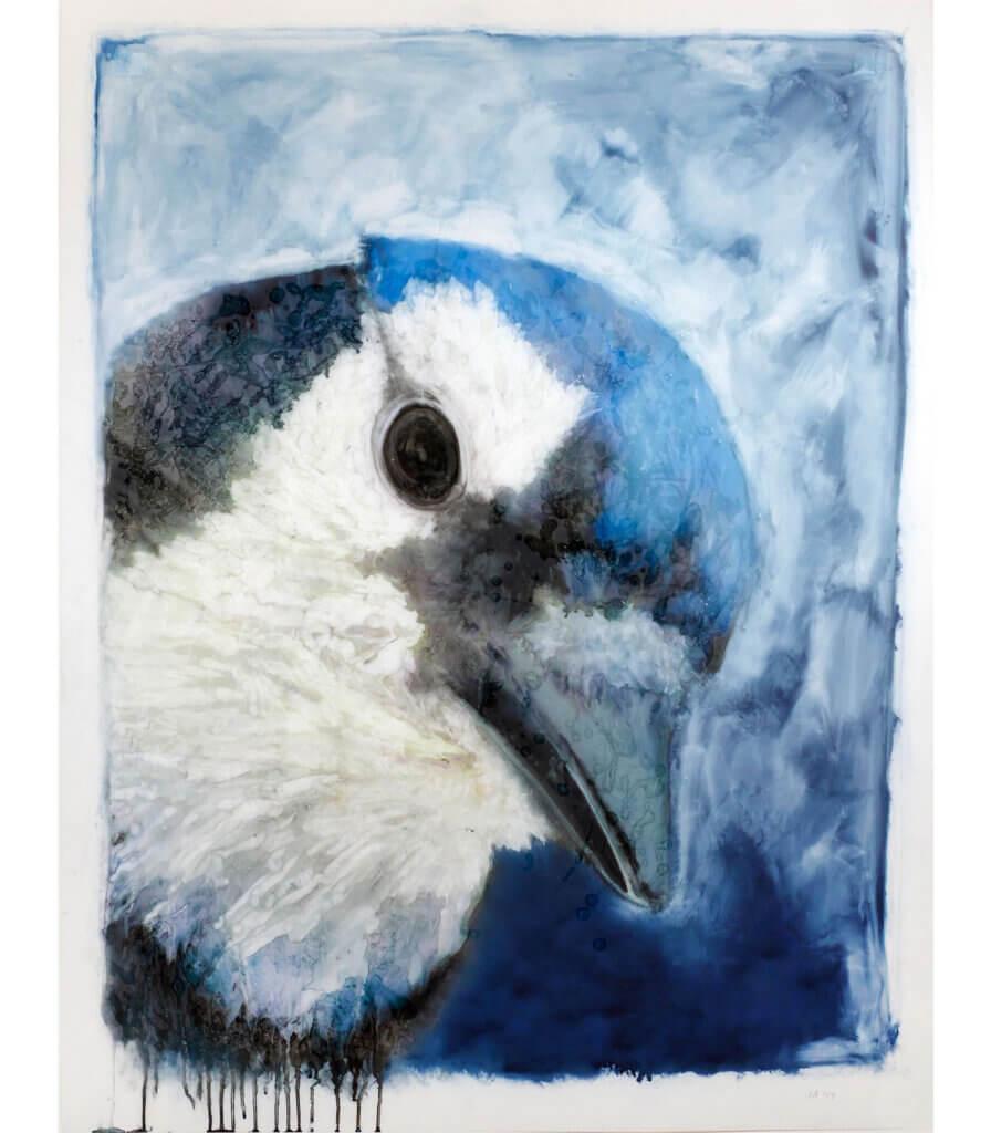 Portraits<br>(Blue Jay)