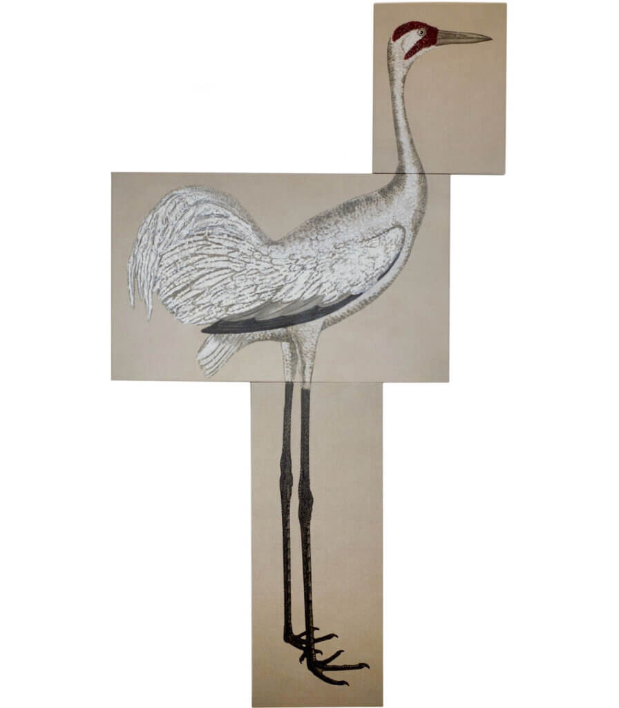 After Wilson<br>(Whooping Crane)